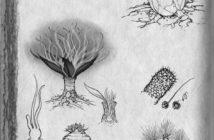 Bocetos de plantas, Michael Whelan y Ben McSweeney